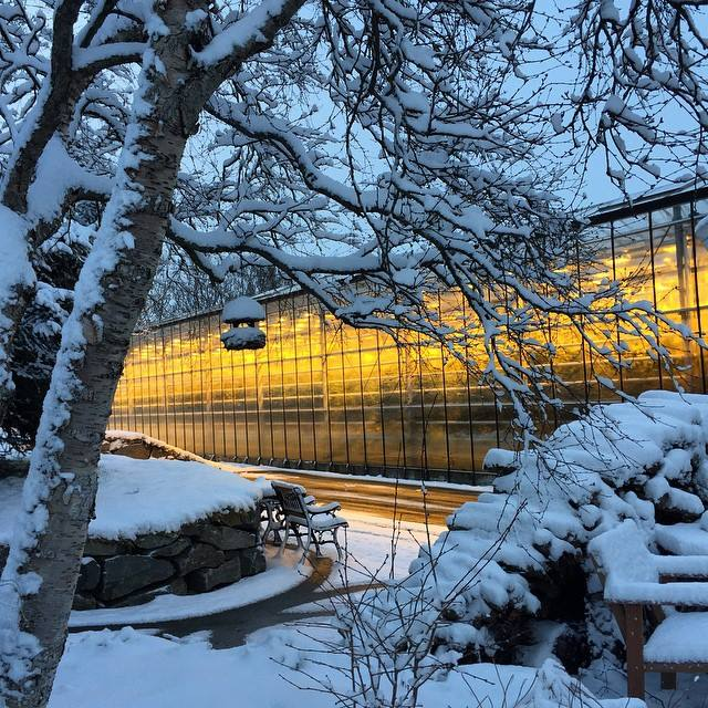 This beacon of light during the harsh Icelandic winter is actually a greenhouse!