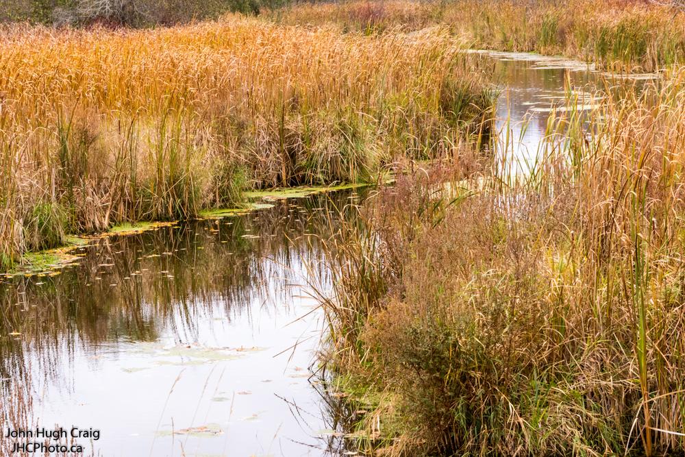Fall Stream Runs Through the Golden Grasses