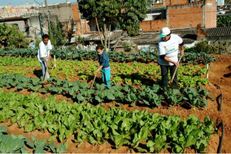 ONG Cidades Sem Fome SP.png