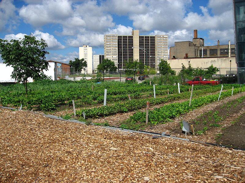 Horta em Detroit.jpg