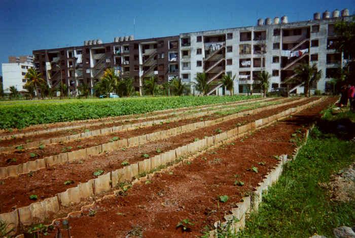 Horta em Havana1.jpg