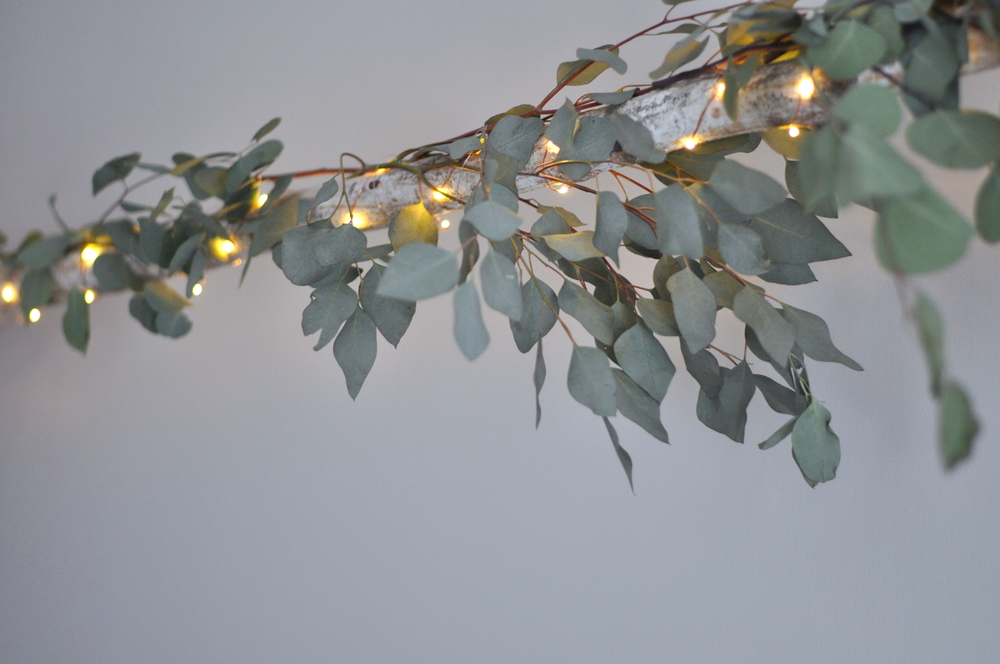 Fresh Eucalyptus Branches Intertwined With Twinkling Lights