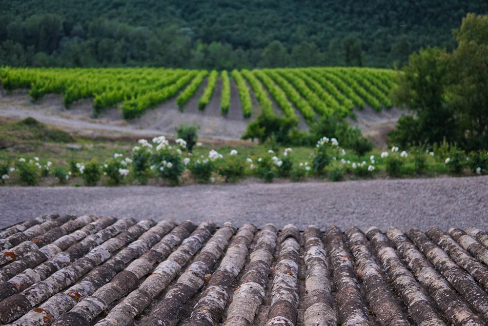 Tuscany - Grapevines + Fine Wines