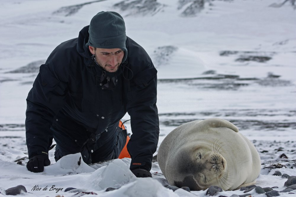 Ryan Reisinger and a young Weddell seal at King George Island, Antarctica. Photo: Nico de Bruyn