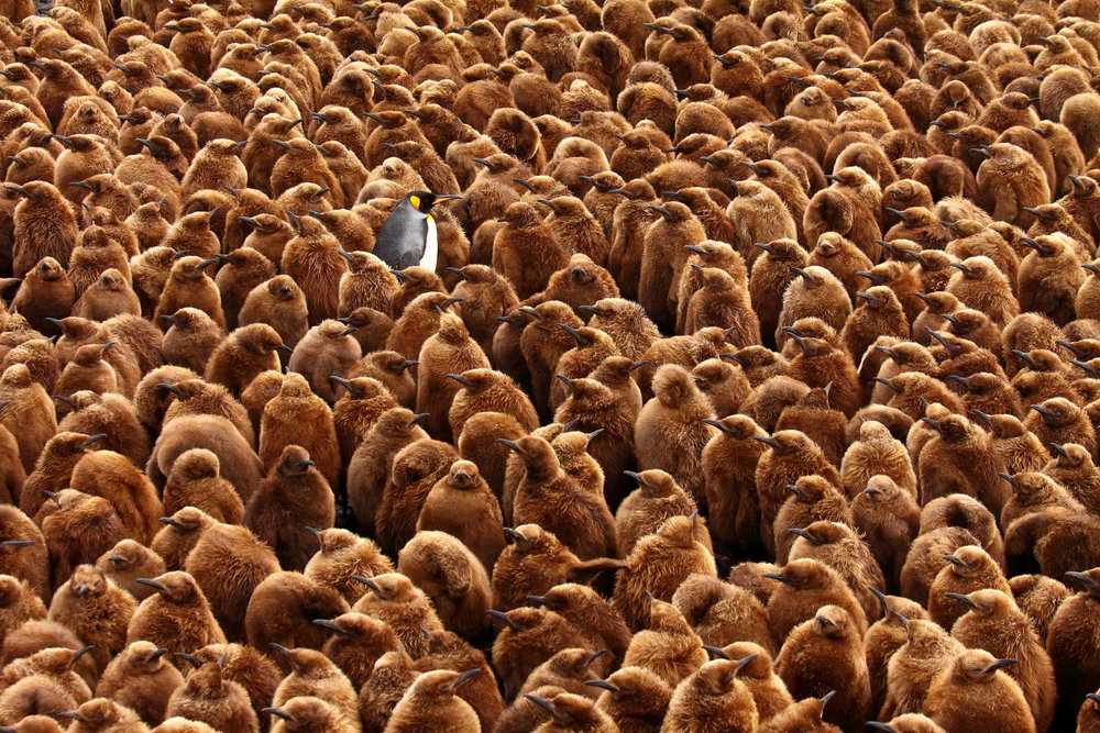 """ Stand out from the crowd "" by Chris Oosthuizen. Overall winner of the 2018 BES photographic competition."