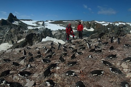 William and Lucas with some chinstrap penguins