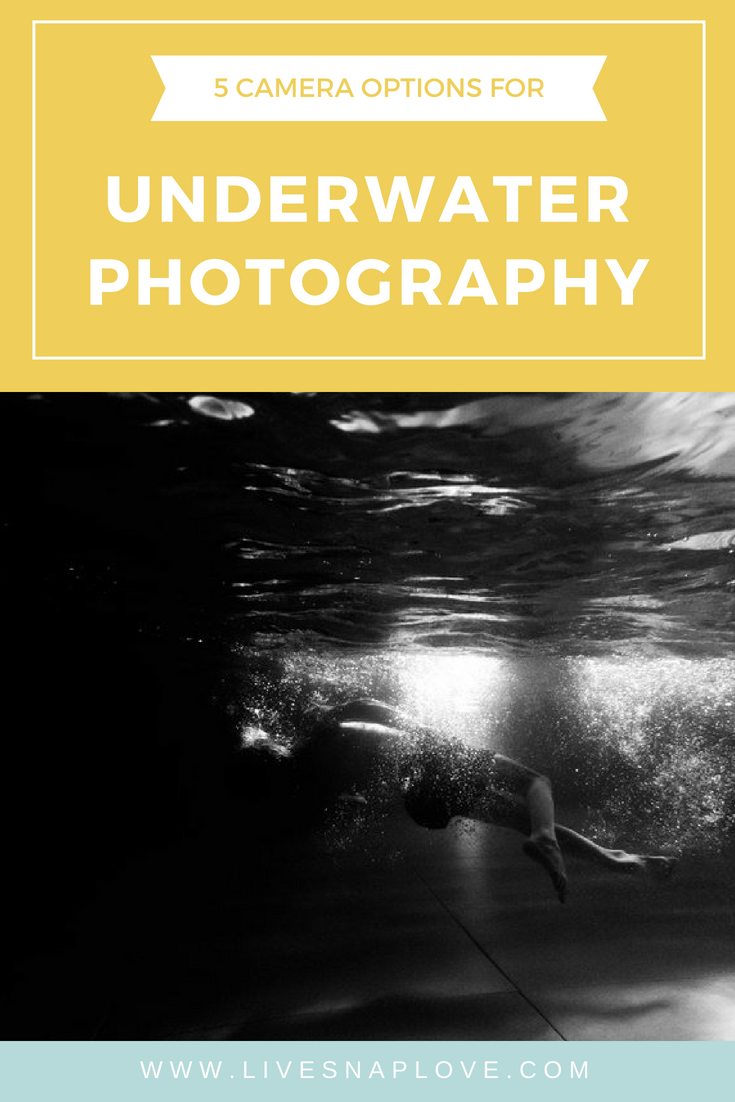 Underwater photography tips - 5 camera options for underwater photography to take gorgeous photos underwater this summer!