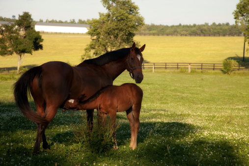 And with spring comes offspring. Everywhere you look there is new life. You can't miss seeing the foals clinging to their mothers while driving down the rolling countryside.