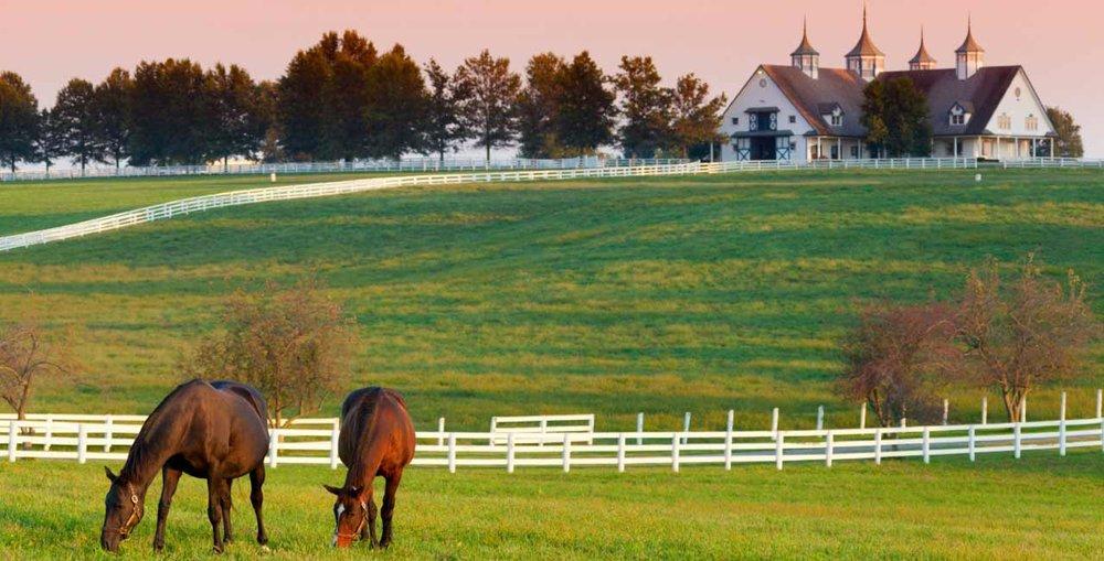 lexington-ky-horse-farm.jpg