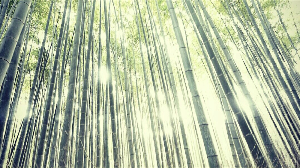bamboo forest near Kyoto
