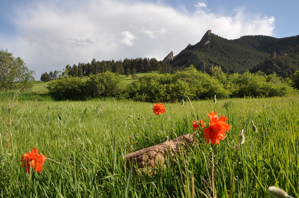 Poppies spruce up the Flatiorns at Chautauqua
