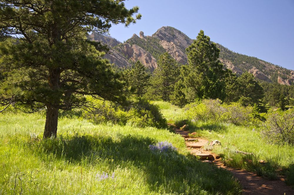 Shadow Canyon displays all the foothills have to offer.