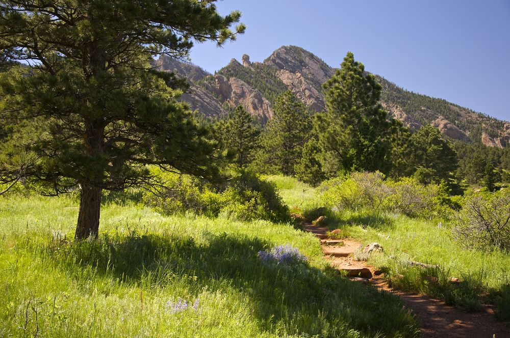 Homestead Trail Boulder