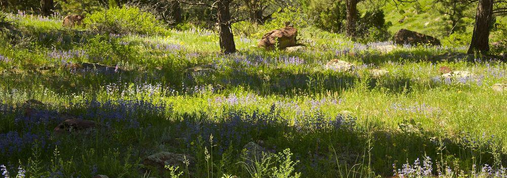 Boulder Colorado Wildflowers