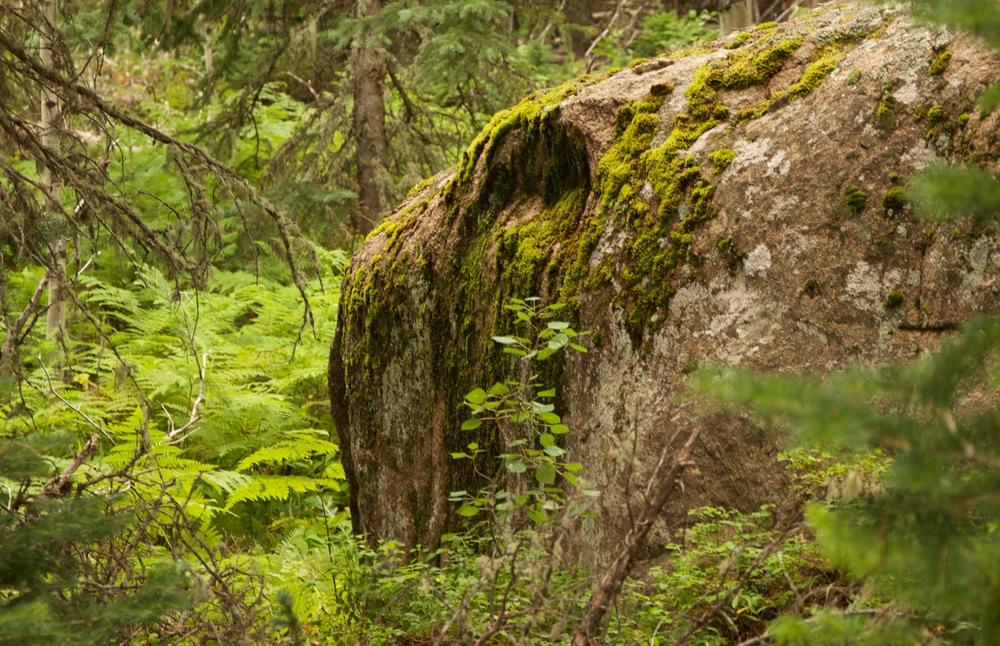 Wild Basin Trail