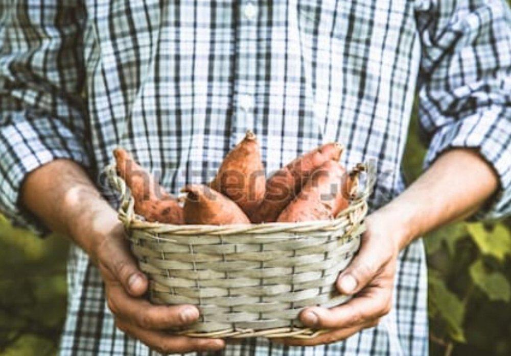 organic-vegetables-farmers-hands-freshly-450w-662370181.jpg