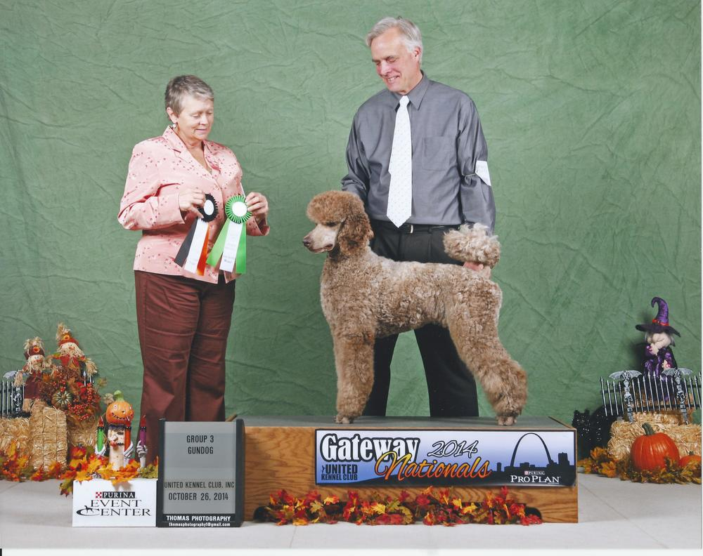 GRCH Jacknic's Rainy Day Champagne Took BOB and a Group 3 at Gateway Nationals!  He is currently ranked in the Top Ten Standard Poodles!