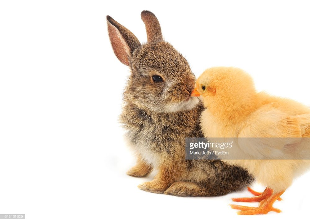 bunny and chick.jpg
