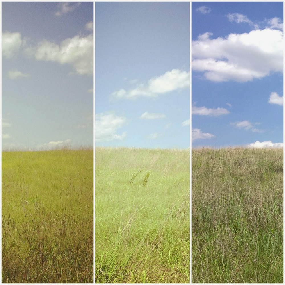 The many prairies of Crow-Hassan Park Reserve