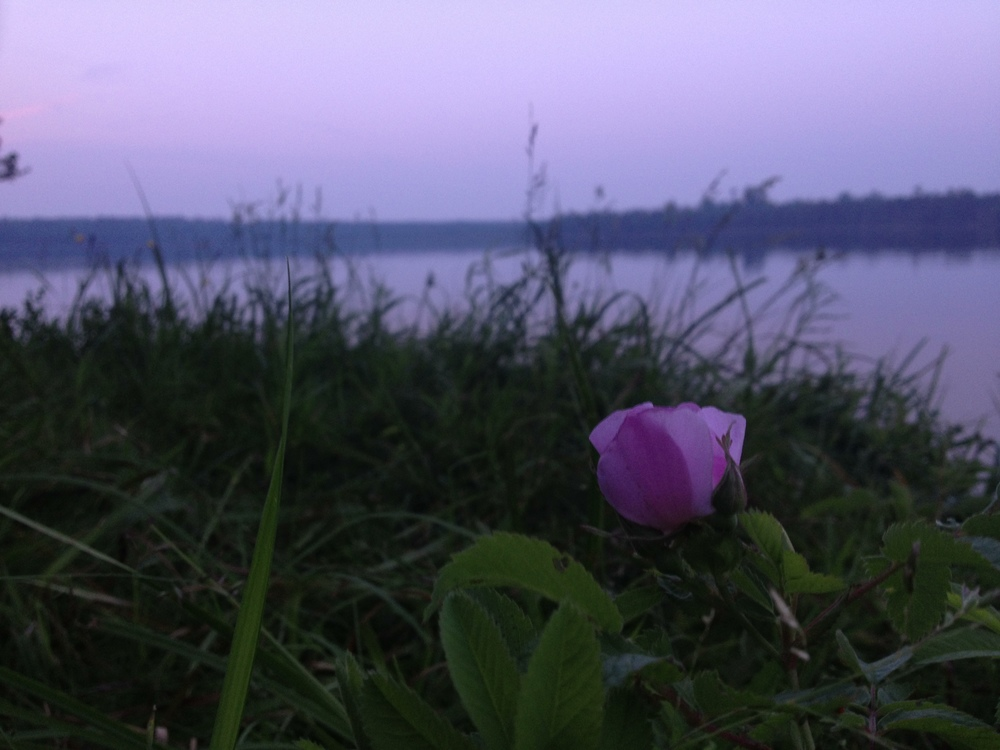 Lakeside Flower