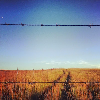 Barbed wire at Blue Mounds State Park keep the herd of Bison from wandering away into surrounding farm fields.