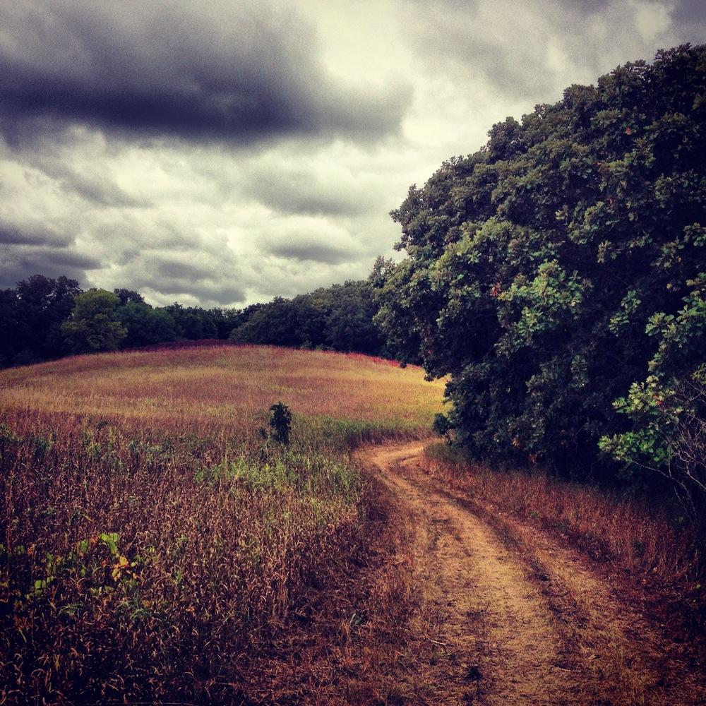Oak Savanna at Camden State Park