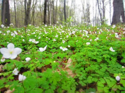 Spring in Whitewater State Park brings carpets of wildflowers - and mushrooms.