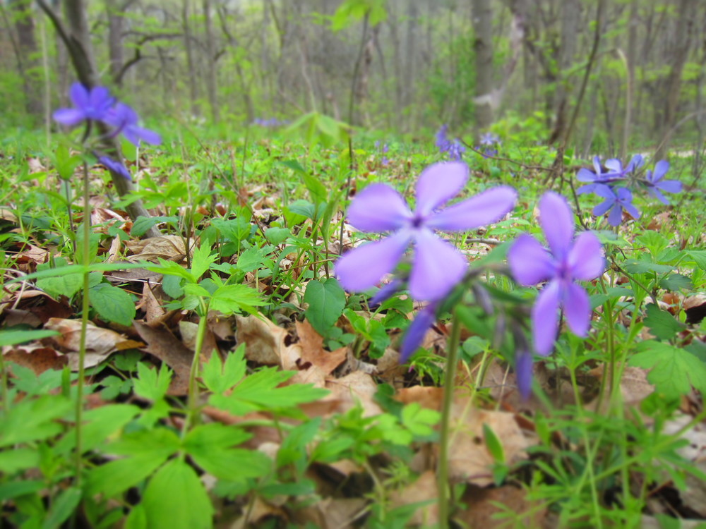 Wildflowers at Whitewater State Park