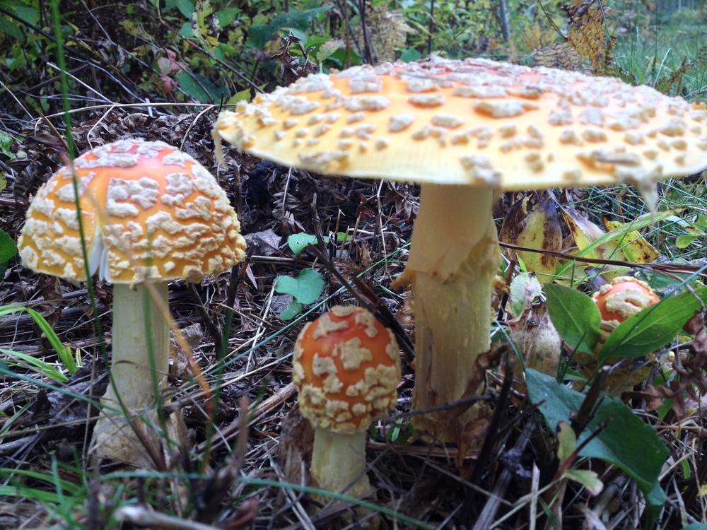 Mushrooms at Temperance River State Park