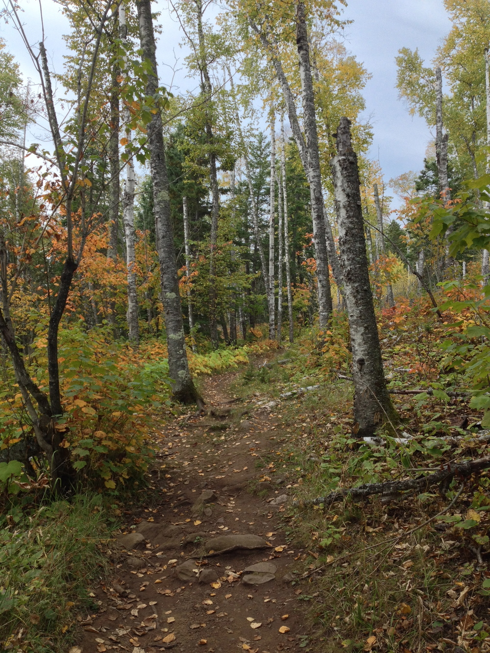 The Minnesota Hiking Club Trail at Cascade River State Park