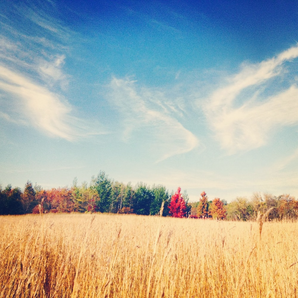 The grass changes color seemingly on a weekly basis, but the forest surrounding the prairie is best in autumn.