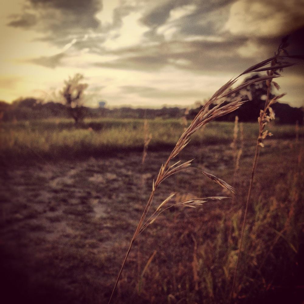 Stormy Prairie