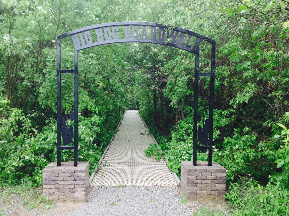 The Bog Walk
