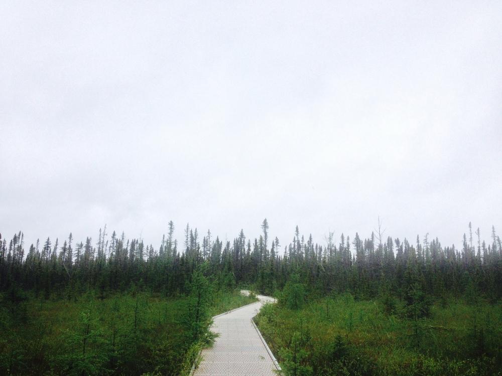 Minnesota Hiking Club at Big Bog State Recreation Area