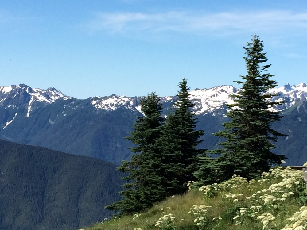 These kind of views about in the mountains of Olympic National Park