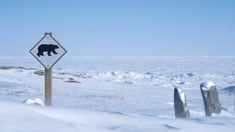 Arctic Live, TV Series [BBC 2]