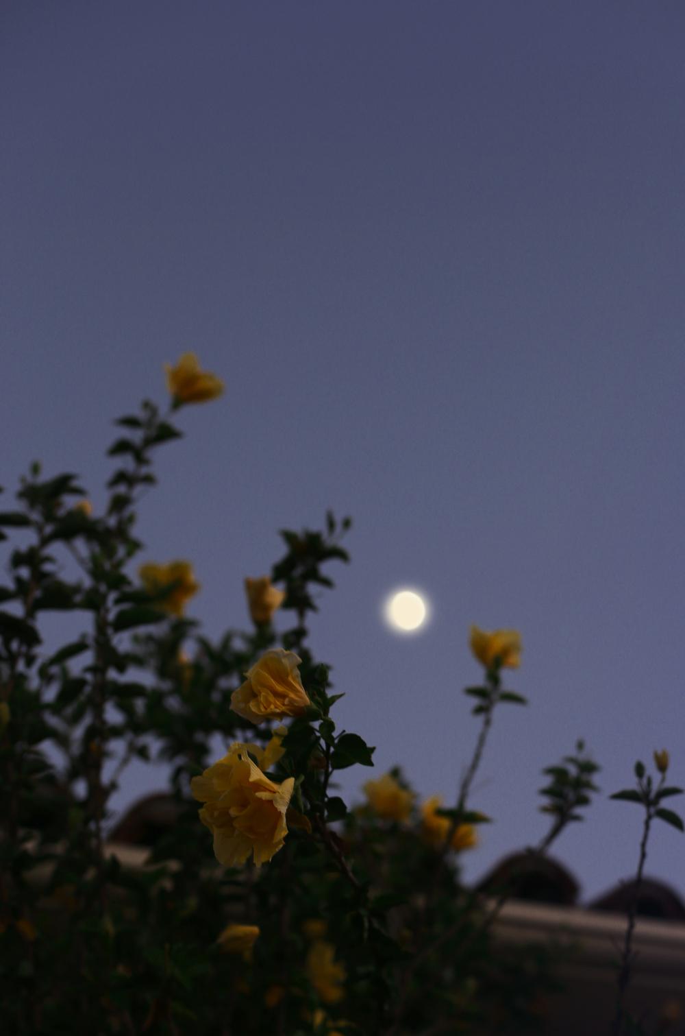 moon.bloom.home.jpg
