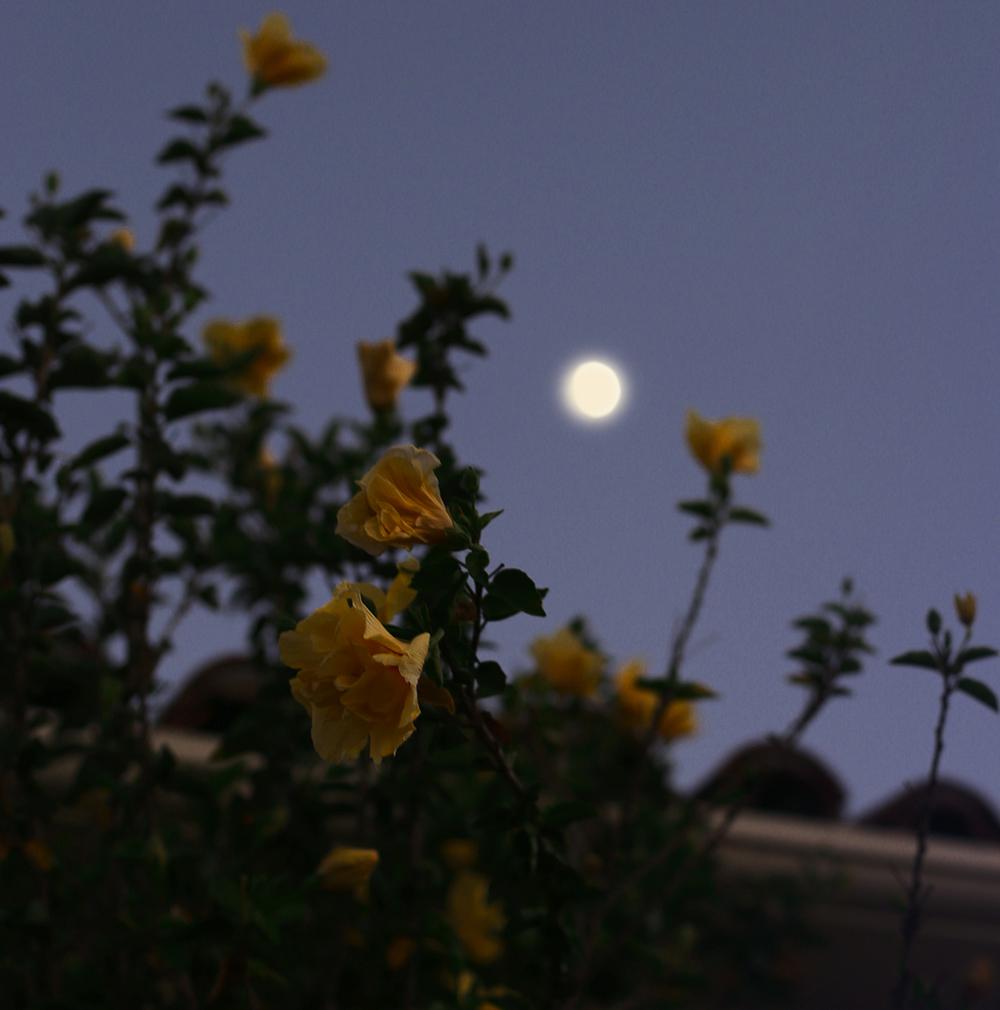 blomcr1.jpg