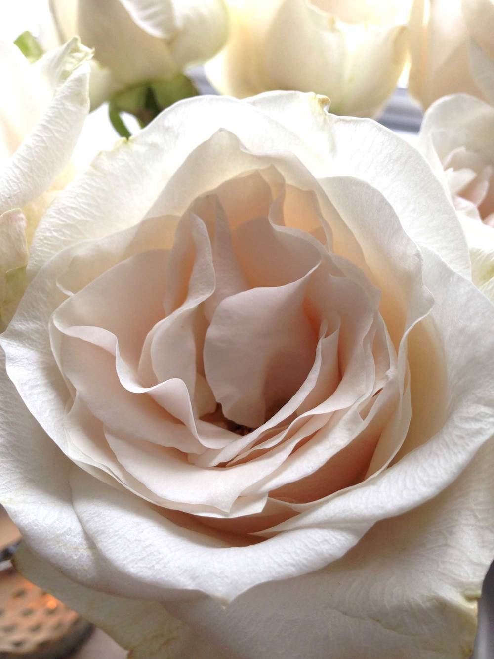Aren't roses gorgeous? I love their papery petals!