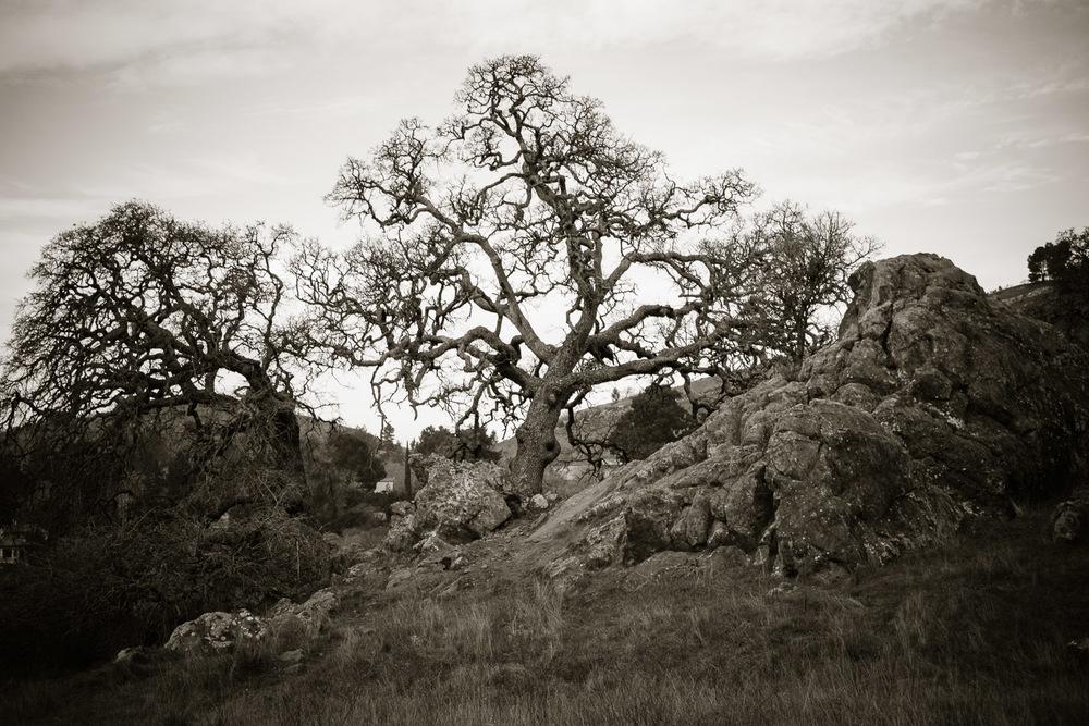 treerocks.jpg