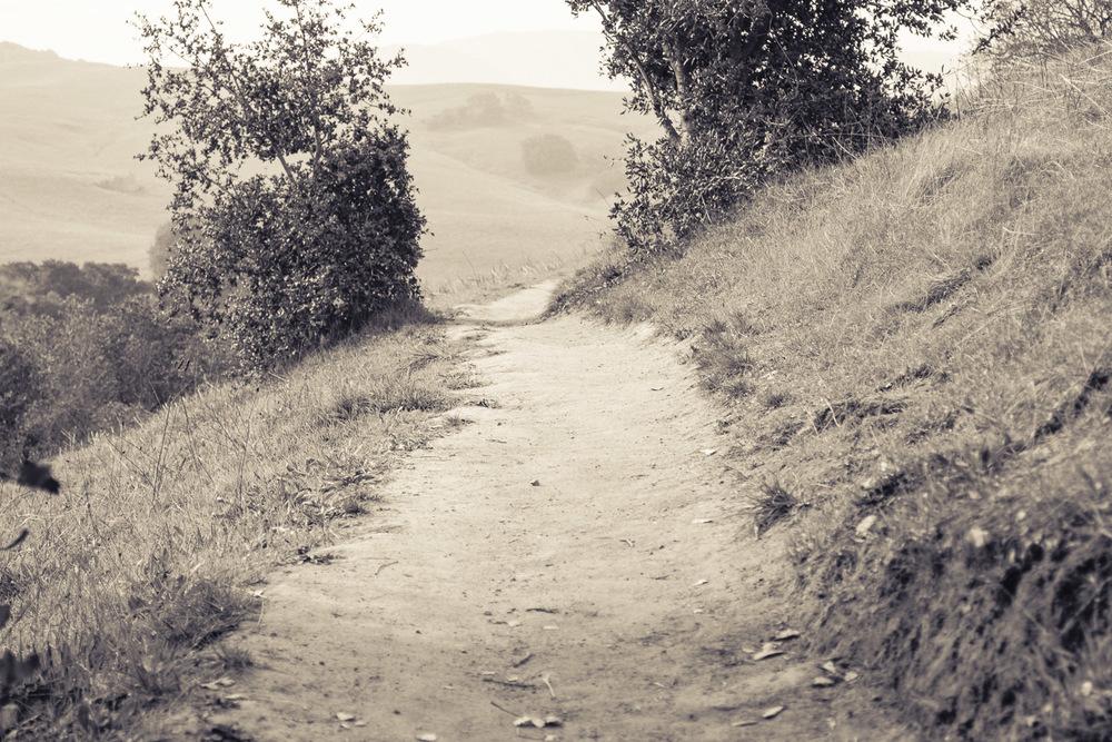 pathlandscape.jpg