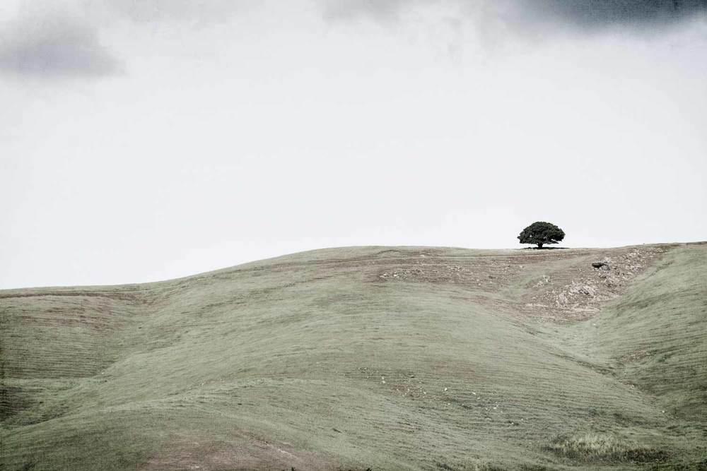 ridgelinetree.jpg