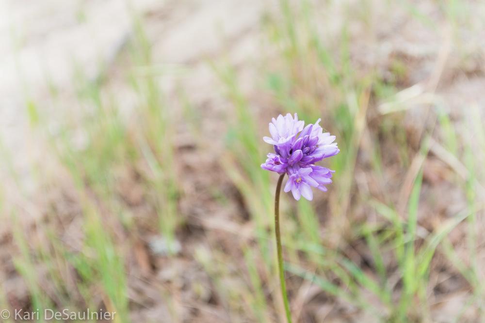sweetflower.jpg