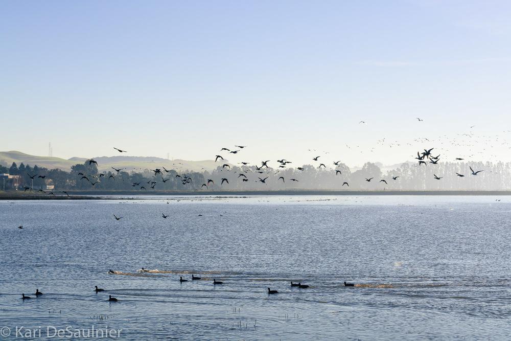 shollenberger_birds.jpg