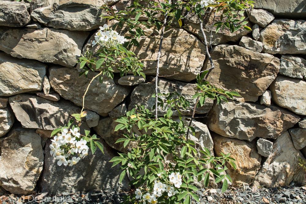 rocksandflowers.jpg