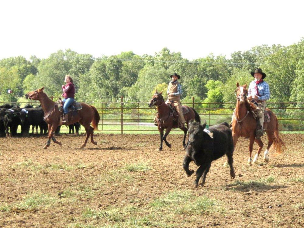 Cutting_cattle.jpg
