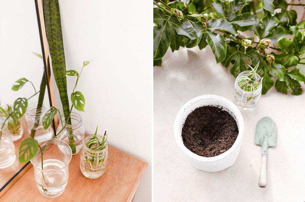 indoor-plants-taylah-golden-journal-6.JPG