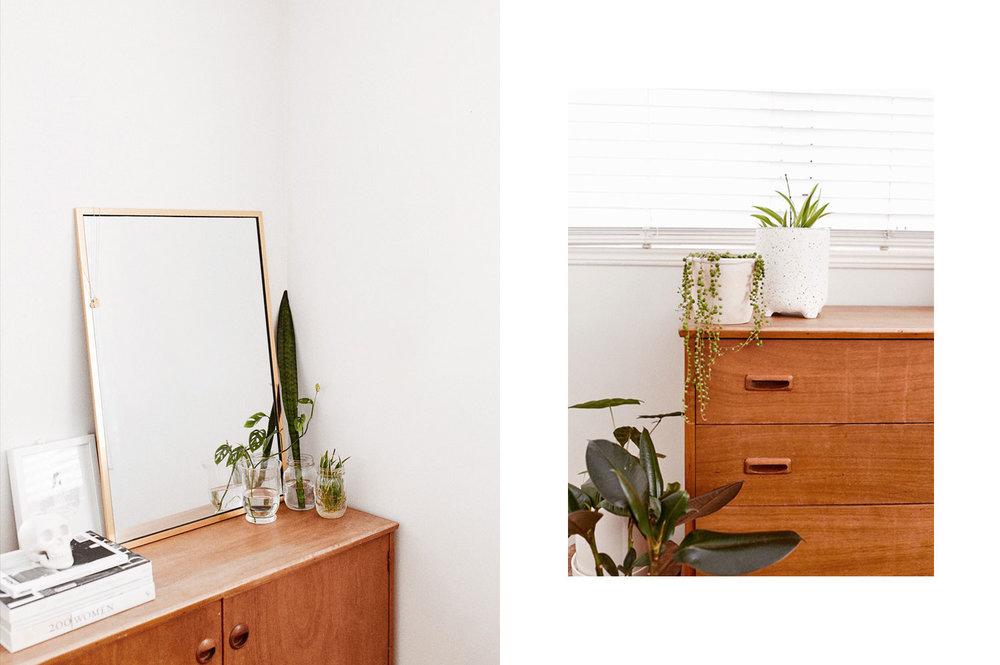 indoor-plants-taylah-golden-journal-7.JPG