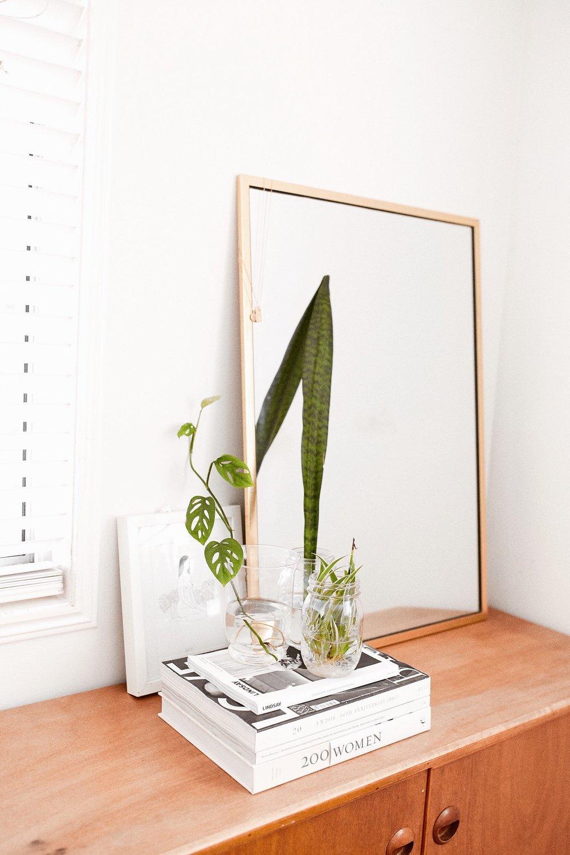 indoor-plants-taylah-golden-journal-2.JPG