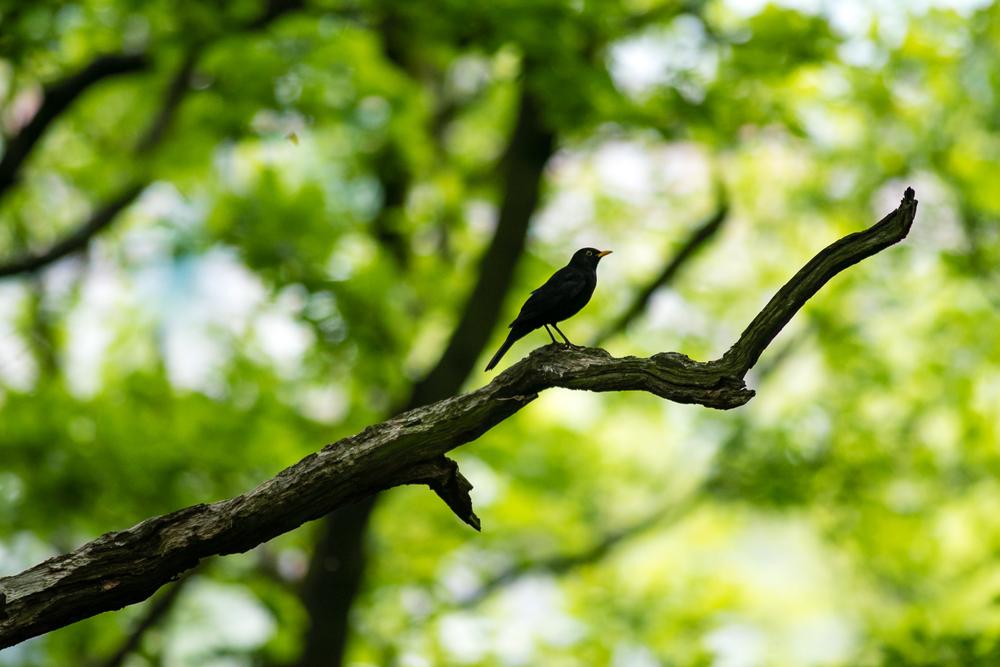 Endcliffe Birding_05.jpg